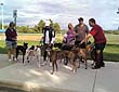Greyhound Walking Club - photo 3.