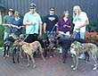 Greyhound Walking Club - photo 4.